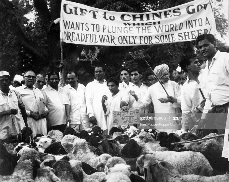 When Sheep insulted China
