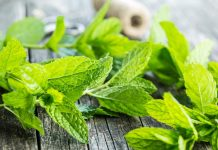 Health benefits of Mint leaves..!